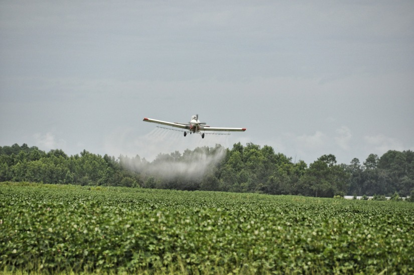 The EPA Denies a Petition to Ban Dow'sChlorpyrifos